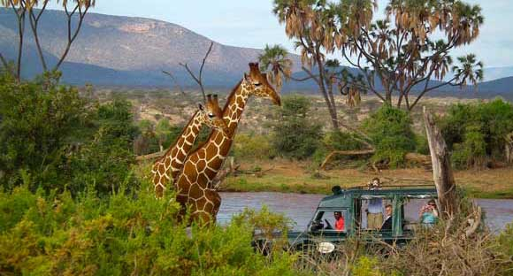 Game drive in Samburu Reserve