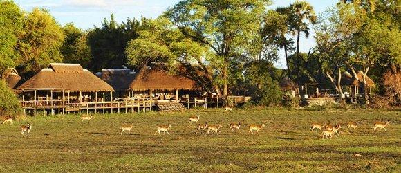 Mombo Camp in the Okavango