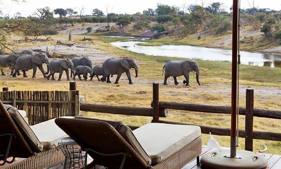 Game viewing at Savute Safari Lodge