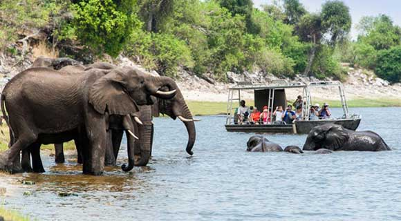 Chobe River game viewing