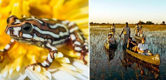 Mokoro safari in the delta
