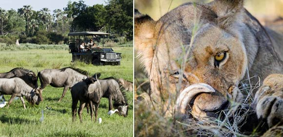 Game drives in Okavango