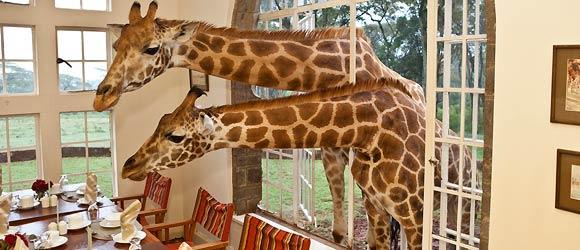 Kenya accommodation: Giraffe Manor