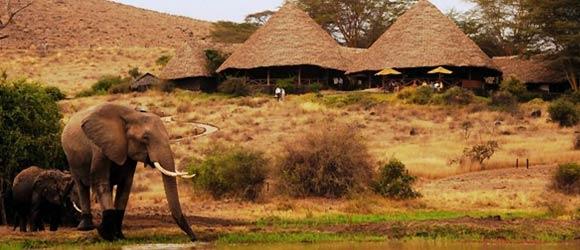 Tortilis Camp - tented safari