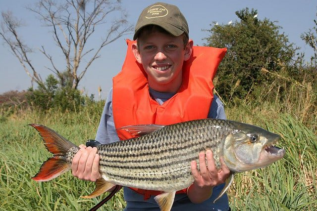 Tigerfish on the Zambezi by Kobus Botha