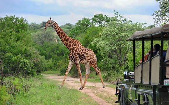 Jock Safari Lodge game drive