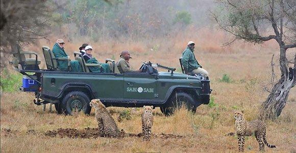 Cheetah sighting on a Sabi Sabi game drive