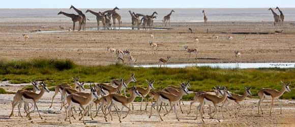 Namibia's Etosha National Park