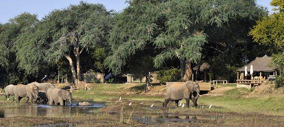 Elephant walk past Ruckomechi Camp