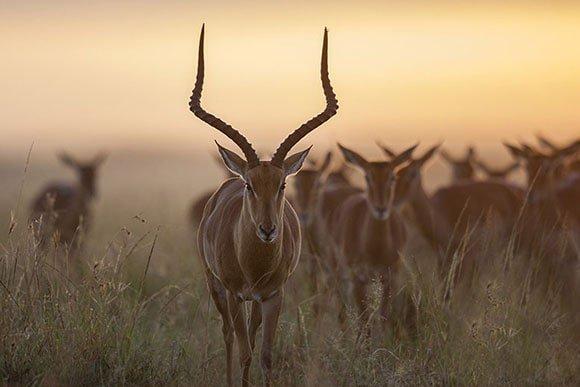 Antelope photographed by Jonathan Scott