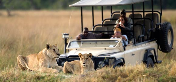 Game drive in Moremi Reserve