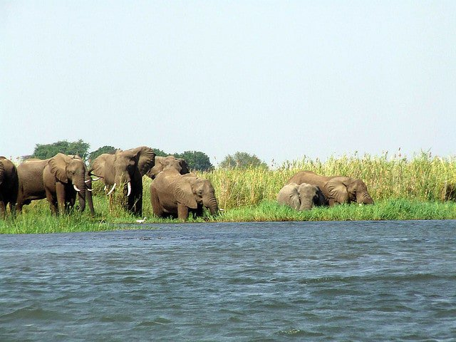 Elephants along the Zambezi River by Martintom