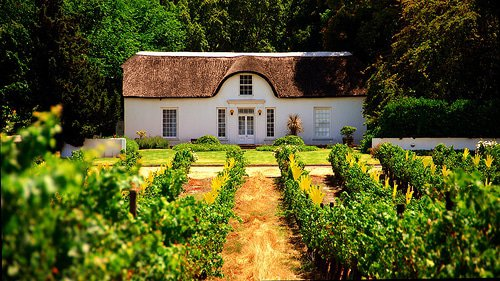 Wine farm in Stellenbosch by slack12
