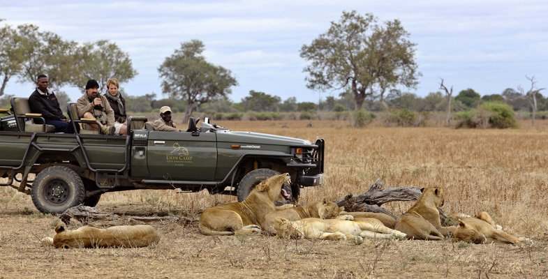On safari at Lion Camp in the South Luangwaa