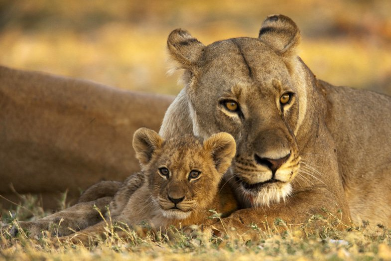 Mother and cub - Selinda Camp