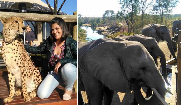 Wildlife encounters at The Elephant Camp
