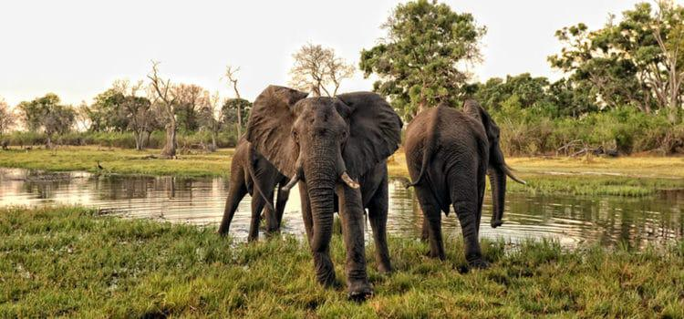 African Bush Camps: Botswana & Zimbabwe