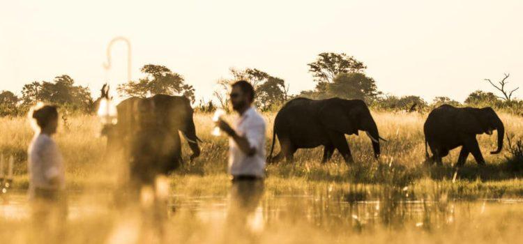 Victoria Falls & Botswana Highlights