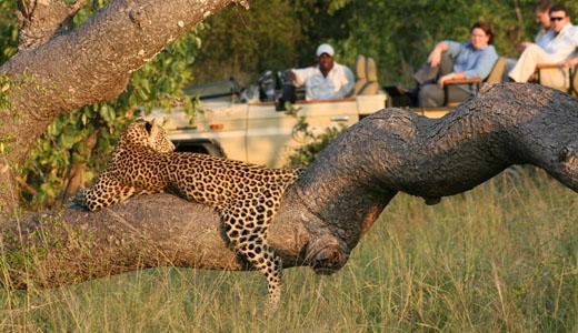 Tintswalo Safari Lodge – Pay 2, Stay 3