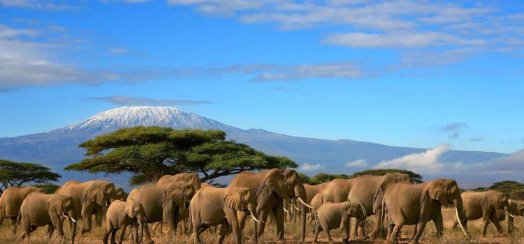 Kenya's Top 5 Parks & Reserves