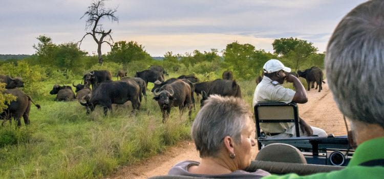 Why work with South Africa's leading luxury tour operator?