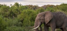 Safari in South Africa's Top Malaria-Free Reserves