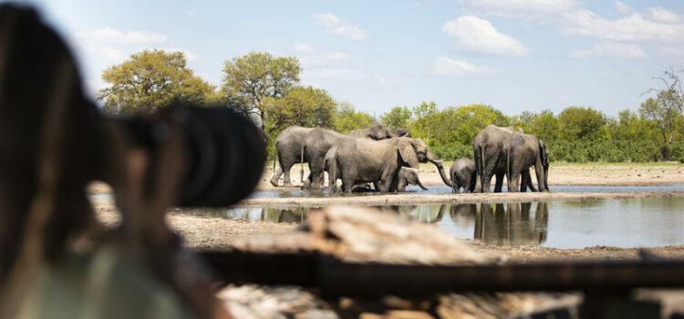 Vic Falls, Hwange & Botswana Safari