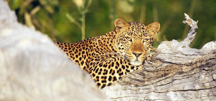 Walk on the Wild Side of Zambia