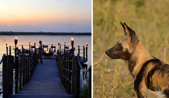 River deck and wild dogs