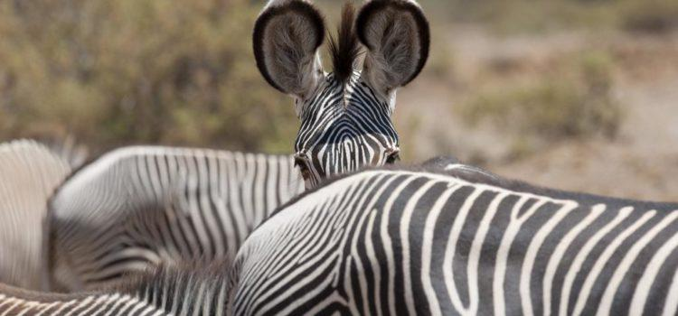 Kenya Safari: Wildlife & Warriors