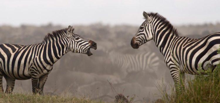 Northern Serengeti