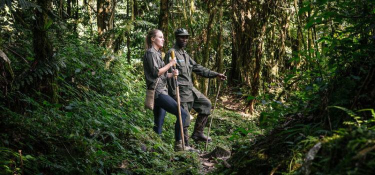 Gorilla Trekking in Uganda and Rwanda: Which is better?