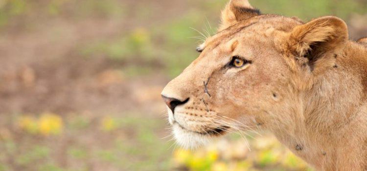Exclusive East Africa Safari