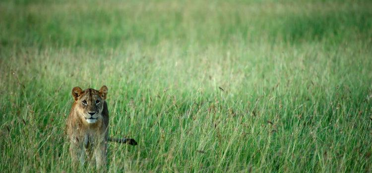 Tanzania's Treasure – the Serengeti Plains