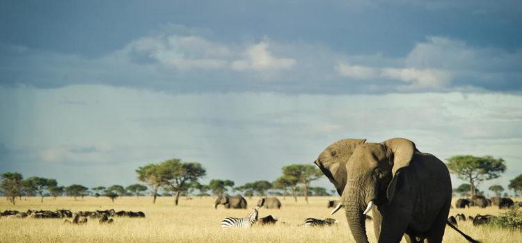 Serengeti – Singita Grumeti