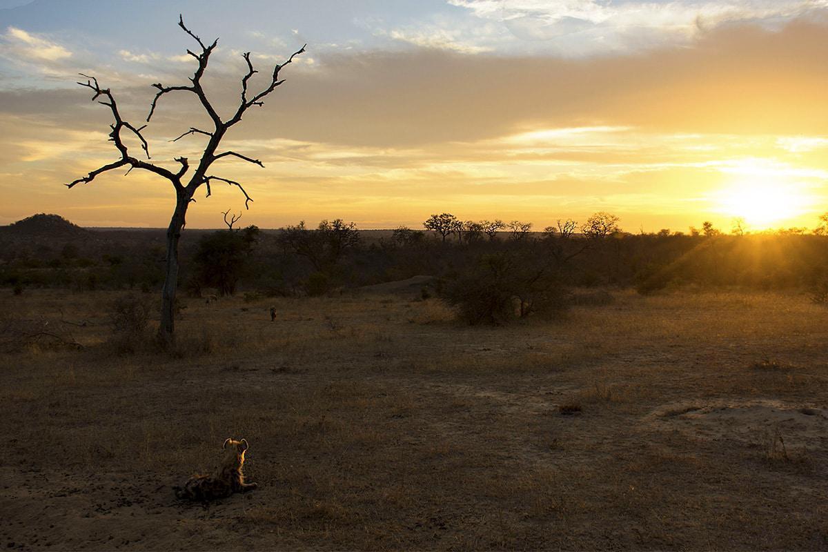 Dawn at Londolozi