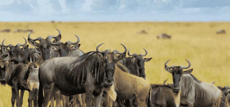 East Africa: Stella's travels to Kenya, Tanzania & Zanzibar
