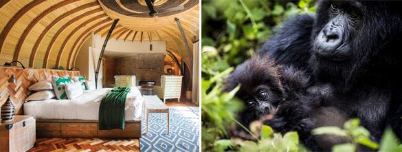 Bisate Lodge & Rwanda mountain gorillas