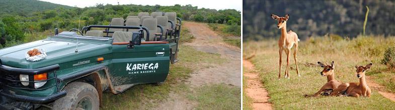 Game drive at Kariega Game Reserve