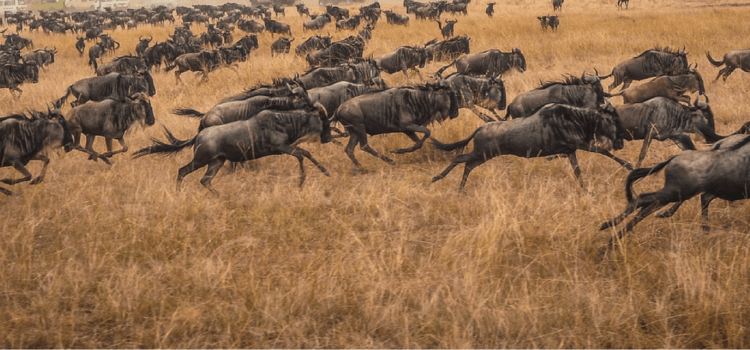 An East Africa safari