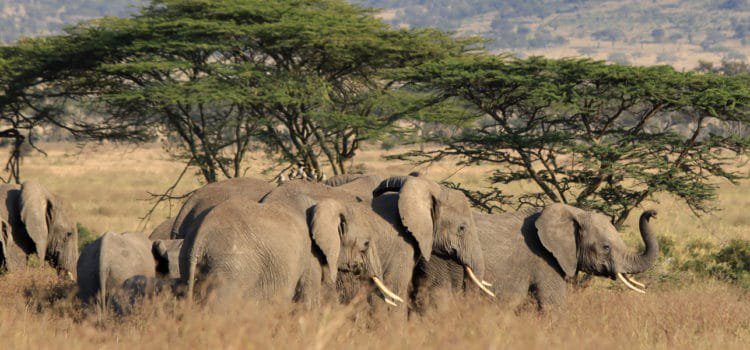 Exploring Tanzania's Northern Safari Circuit