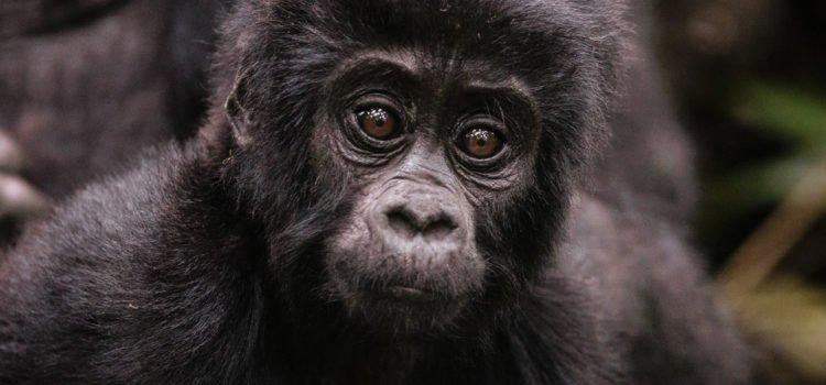 4 Alternatives to Gorilla Trekking in Rwanda