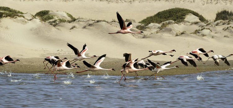 Five Top Birding Experiences in Namibia