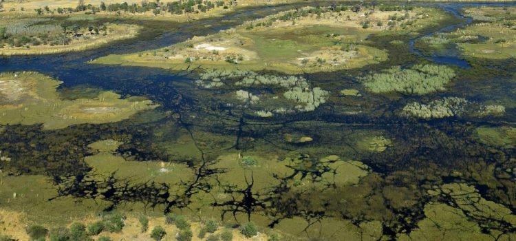The Ins & Outs of an Okavango Delta Adventure