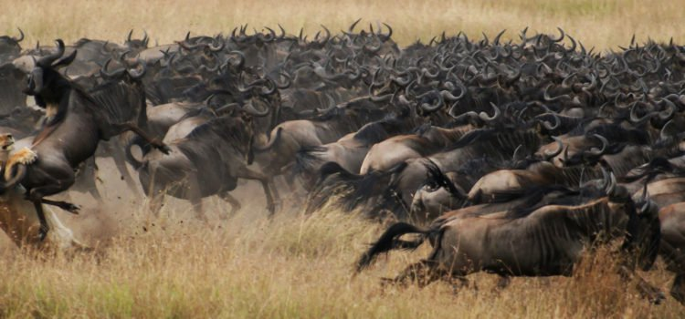Gnus on the Move: Best Places to See the Wildebeest Migration