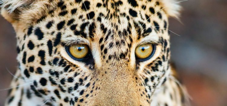 Best leopard sightings in South Africa