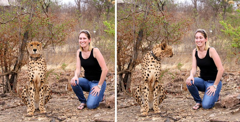 A tribute to Sylvester, the cheetah ambassador