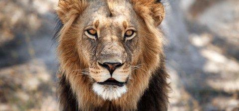 The Circle of Life: Lion King Safari