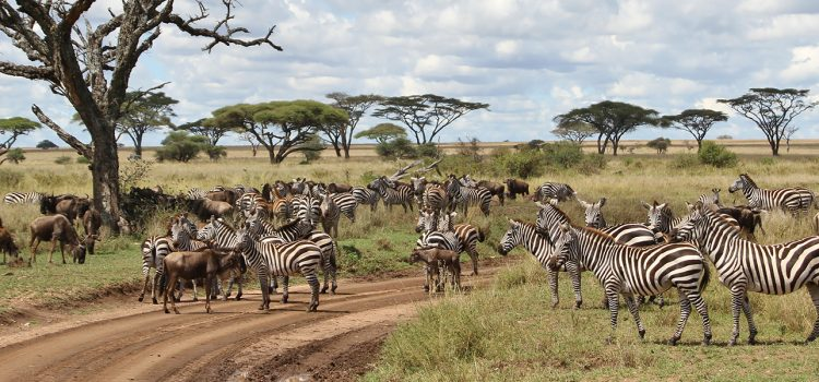 What to expect on an East Africa safari circuit