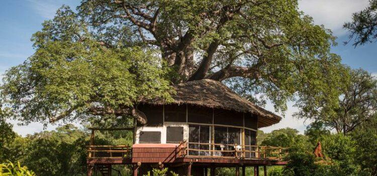 Elewana Tarangire Treetops